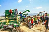 Harvesting | July 28, 2008
