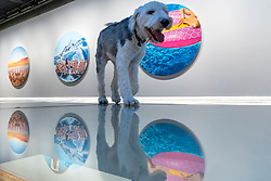 """© Licensed to London News Pictures. 27/05/2021. LONDON, UK.  Rapha, the gallery owner's dog, at the opening of """"You Gave Me Paradise"""", a solo exhibition by British painter Will Martyr at Unit London in Mayfair.  The paintings transport viewers to a space of rest and relaxation in a time when travel restrictions are still in place.  They also reinforce the exhibition's overarching theme of warmth and companionship and are reminiscent, for the artist, of his fondest memories with his wife.   Photo credit: Stephen Chung/LNP"""