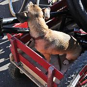 Tucson Bicycle Swap Meet Fall 2013