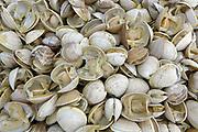 clams seafood tsawout