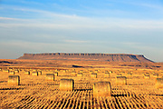 Hay Bales near Square Butte, Montana.