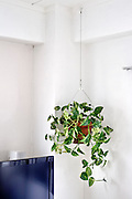 corner in domestic house with potted plant hanging from ceiling