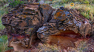 Sandstone layers in rock and badlands formations in Theodore Roosevelt National Park, North Dakota, USA