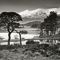 Scots pine, Loch Tulla and Black mount