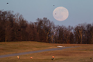 Full moon and crows at Randall Airport in the Town of Wallkill, N.Y.,  on Dec. 29, 2020.
