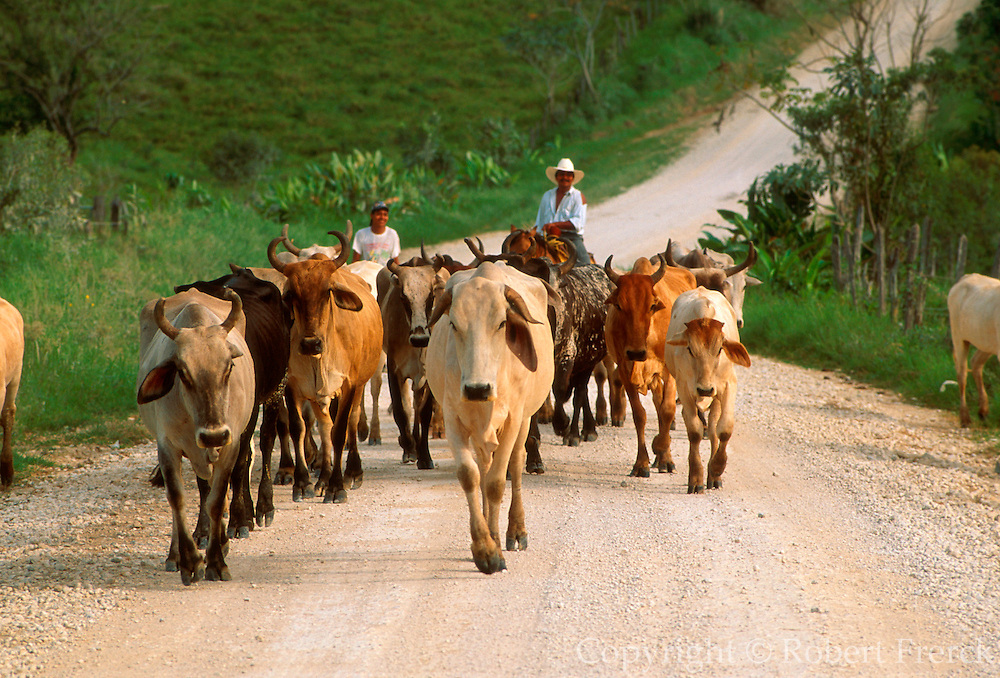 MEXICO, AGRICULTURE, TABASCO STATE Cattle ranching near Salto de Agua southeast of Villahermosa, also a rich oil producing area
