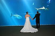 Stephanie & Brett's Wedding