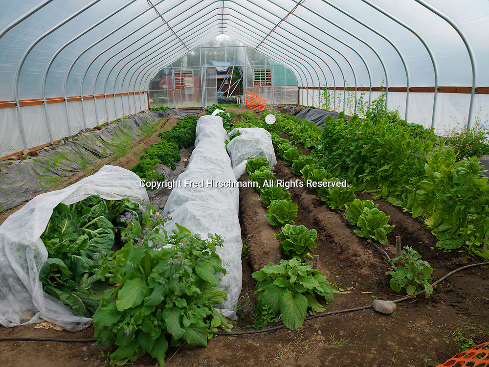 Hoop Greenhouse at The Farm, Lake Clark, Port Alsworth, Alaska.