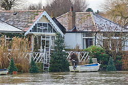© Licensed to London News Pictures. 05/01/2014. Shepperton, UK Two men remove Christmas decoration from a tree in floodwater. Rising river levels in the River Thames at Shepperton Lock in Surrey threaten local housing along the river today 5th January 2014. Britain is experiencing flooding and more heavy rain is expected. Photo credit : Stephen Simpson/LNP