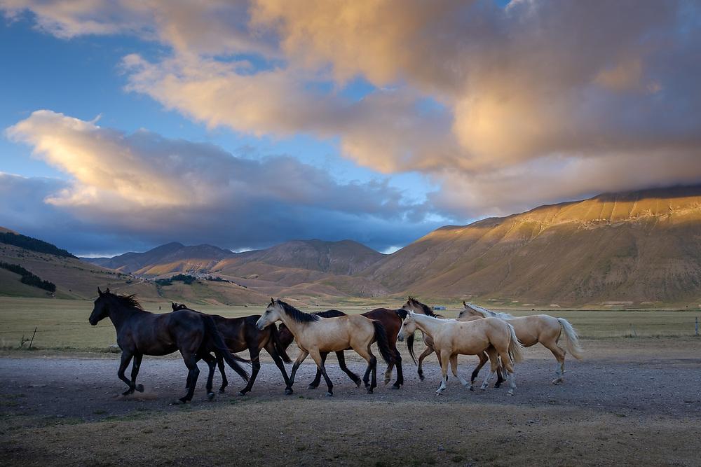 A group of horses is moving on the Piana grande di Castelluccio within the National Park of the Sibillini Mountains in the central Italian region of Umbria.