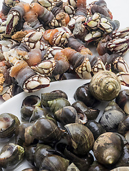 Close-up of fresh goose barnacles and common periwinkle , Getxo, Algorta, Basque Country, Biscay, Spain, Europe