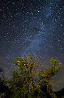 Fireflies fly in front of a tree at Blue Mounds State Park in Minnesota. The stars of the milky way shine in the sky above.