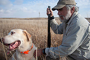 Experienced hunter John Davidson caring for his retrieving gun dog after hunting a slough in the North Dakotan landscape near Minot, North Dakota, United States. Labrador Chester is a trained retriever on this occasion hunting upland game birds. Working dogs work extremely hard both retrieving birds such as pheasant or grouse once shot, but also flushing birds out from the undergrowth.