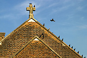 Pigeons on the roof of the prison chapel. HMP Wandsworth, London, United Kingdom
