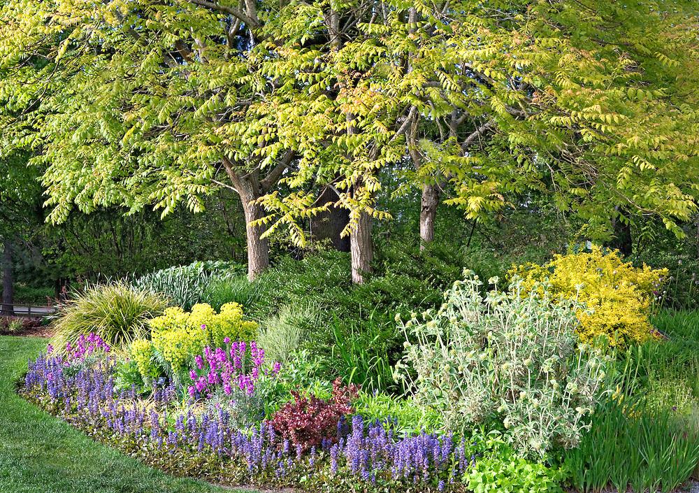 Euphorbia Plants in Garden Design
