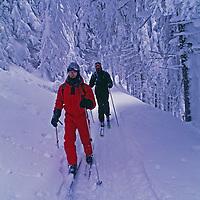 Cross country skiers glide through deep forests near Zarnesti.