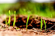 Grass blades grow out of the ground in a harsh environment