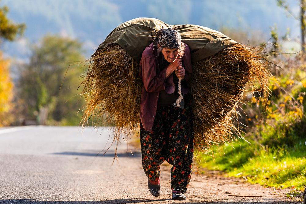 Muslim woman brings on her shoulder big pack of hay