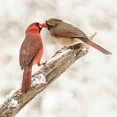 Bird Favorites