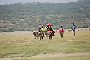 Donkeys and cart, Abijatta-Shalla National Park, Ethiopia
