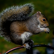 Photographer feed nuts to squirrel and pigeon in Hype park