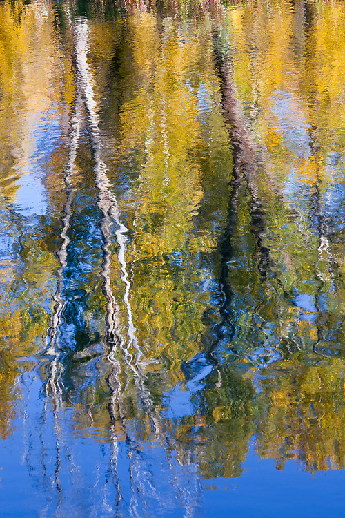 Editions of 17<br /> Brilliant fall colors of riverside Cottonwood trees reflect in the Snake River in Autumn near Swan Valley in Eastern Idaho in the American West