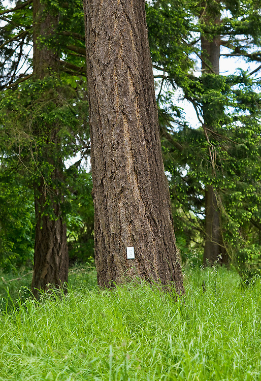 An electrical outlet on a tree in a grassy field.
