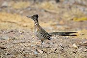 Wildlife photographs from Tombstone Arizona, USA