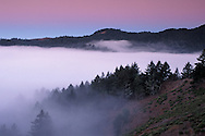 Fog bank at dawn in valley along forest hillside of Mount Tamalpais State Park, Marin County, California