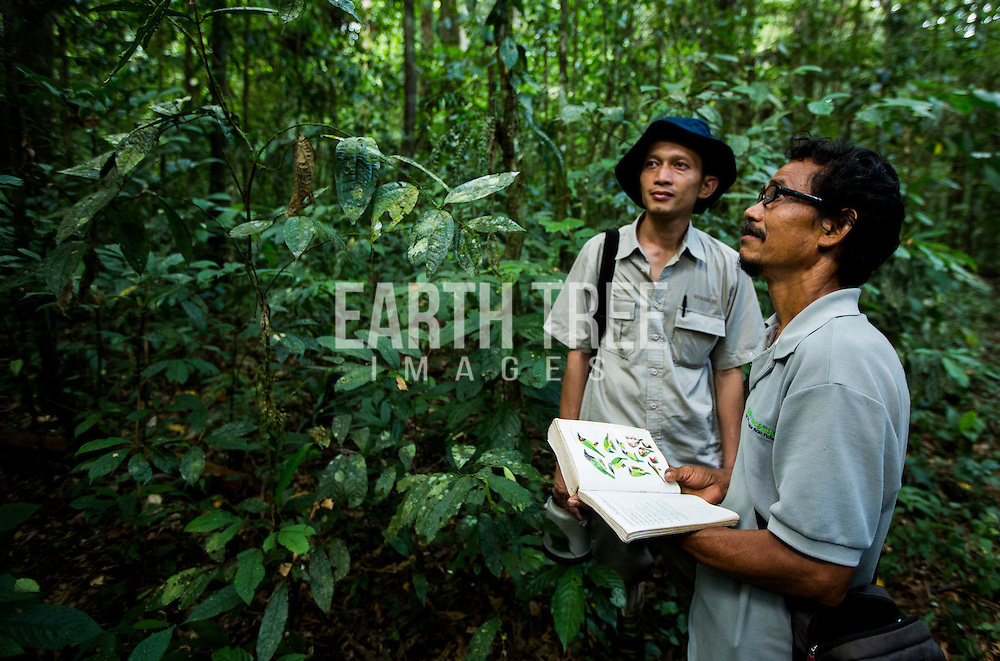 Rudi Putra (L), award winning conservationist and biologist pictured in the Leuser Ecosystem, Sumatra, Indonesia. Photo: Paul Hilton for Earth Tree