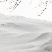 Beech branches against white background from snow