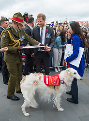 The Duke of Sussex meets a dog named Nina during a public walkabout on a visit to the newly unveiled UK war memorial and Pukeahu National War Memorial Park, in Wellington, on day one of the royal couple's tour of New Zealand.