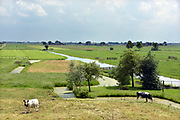 Nederl;and, Kinderdijk, 30-5-2018Typisch nederlands, hollands, landschap met groene weilanden in polders, water in sloten en koeien in laagland .Foto: Flip Franssen