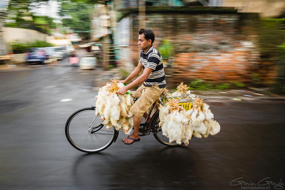 A man on a bicycle carrying live chickens to sell at a street market, Kolkata City, Kolkata, India
