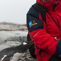 Petermann Island, Antarctica.