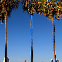 USA, California, San Diego. San Diego Skyline and Palm Trees.