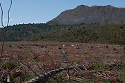 """Right adjacent to this beautiful native forest, is an industrial land rape ongoing. In typical New Zealand style, pine mono culture is being """"harvested"""" in clear cut cycles, right to the edge of Tarawera nativ forest."""