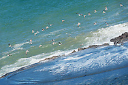 Seagulls flying at the beach.