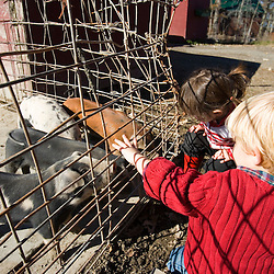 Checking out the pigs at the Colby Farm stand in Newburyport, MA. MR