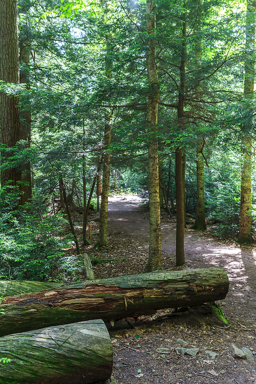 Benton, PA, USA - June 15, 2013: A hiking trail in Pennsylvania's Ricketts Glen State Park.
