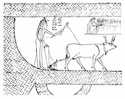 Nesitanebtashru ploughing and reaping. From 'The Greenfield Papyrus' (funerary papyrus of Princess Nesitanebtashru) c 970 BC