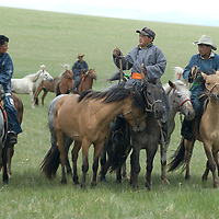 Nomadic herders tend to their family's stallions after a 20km race at a traditional naadam festival on a remote passnear Muren, Mongolia.