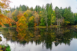 Pitlochry, Scotland, UK. 24th October 2021. Autumnal colours on trees are reflected in Loch Dunmore near Pitlochry. The forests and woods of Perthshire are ablaze with autumn colours at the moment.  Iain Masterton/Alamy Live News.