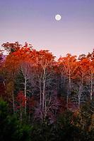 Moon sets over Laurel Lakes in North Carolina.