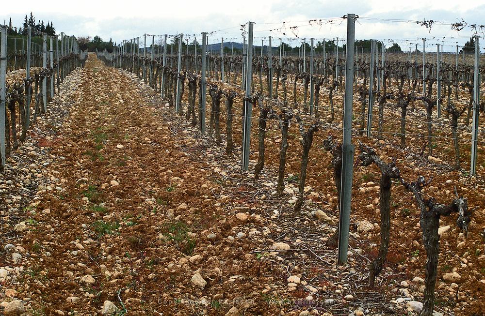 Chateau Peuch-Haut, St Drezery. Gres de Montpellier. Languedoc. Vines trained in Cordon pruning. Terroir soil. France. Europe. Vineyard. Soil with stones rocks.