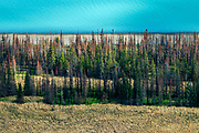 A patch of damaged forest near Anchorage in Alaska. The borealis forest – typically pine, birch and larch - make up about thirty percent of all forest in the world. Less efficient than rain forests, it's still a vital part of the carbon sink. The mean temperature in the arctic areas are already 1.5c warmer than normal. Higher levels of CO2 accelerate growth of the forest. However; as growth is accellerated, the lifespan of the trees is shortened. The net result is a CO2 saturated forest that turn from being a carbon sink to emitter.