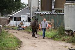 Fokkerij Gijsbers, Bukkie <br /> Stal Gijsbers - Loosbroek 2018<br /> © Hippo Foto - Dirk Caremans<br /> 28/08/2018