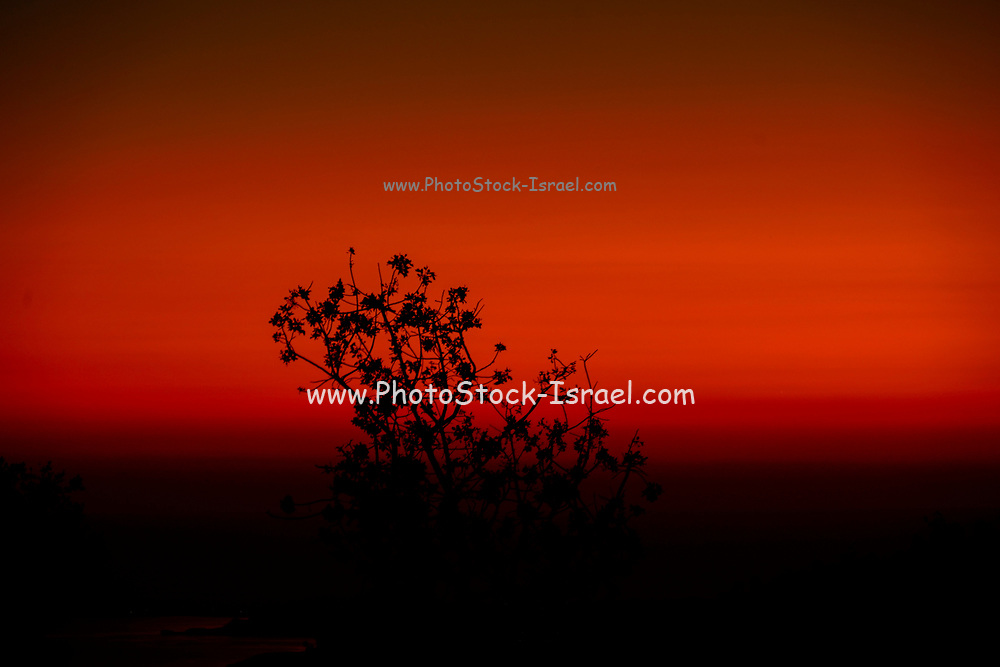 Amazing, awe inspiring red and black sunset with a silhouette of a tree in the foreground. Photographed on the Island of Cephalonia, Ionian Sea, Greece