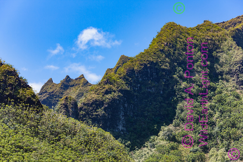 Forest on the steep mountainous terrain of the Na Pali coast of Kauai. Lush tropical vegetation clings to the steep slopes, forming a distinctive rainforest. Hawaii, © David A. Ponton