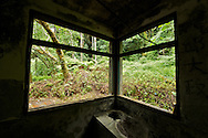 Looking through the broken windows of an old ranger station into the lush forest of northern Taiwan.